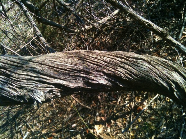 Bois Darc Log -This beautiful tree is found on our NE Texas Homestead. The posts are rot resistant and very helpful on the homestead. #TxHomesteader