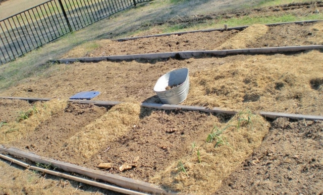 Taylor-Made Ranch Raised beds stripped (640x387)