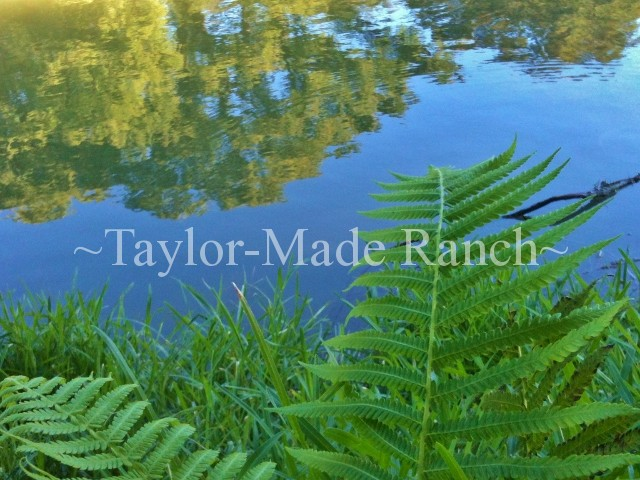 Guadalupe River New Braunfels Texas#TaylorMadeRanch