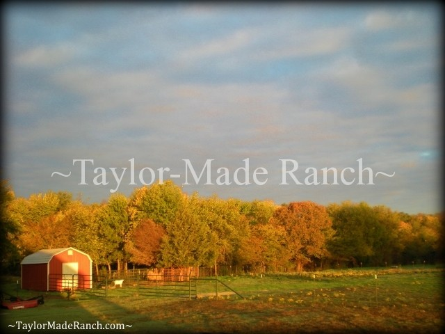 11-13 Fall Color #TaylorMadeRanch