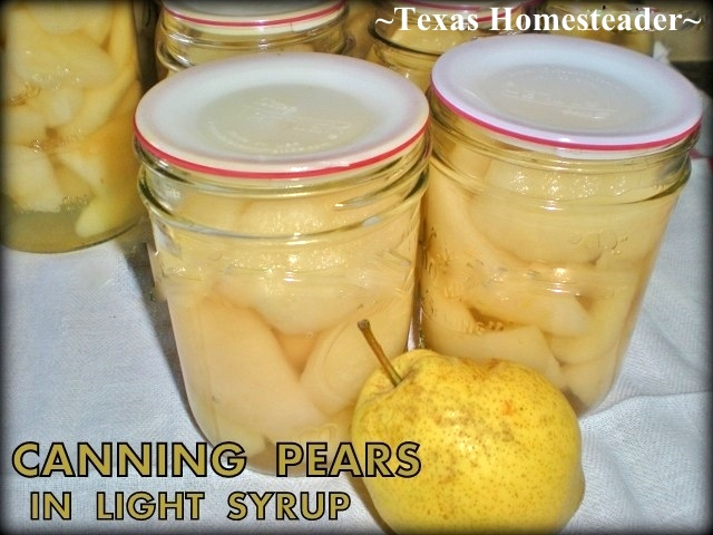 WATER-BATH CANNING FRESH PEARS In Light Syrup. I like to add a light splash of vanilla to the syrup before adding to the pears - DELICIOUS #TexasHomesteader