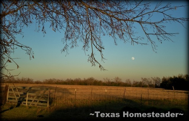 As moonlight blankets the ranch, peace & quiet return once more. All is right in my world... #TexasHomesteader