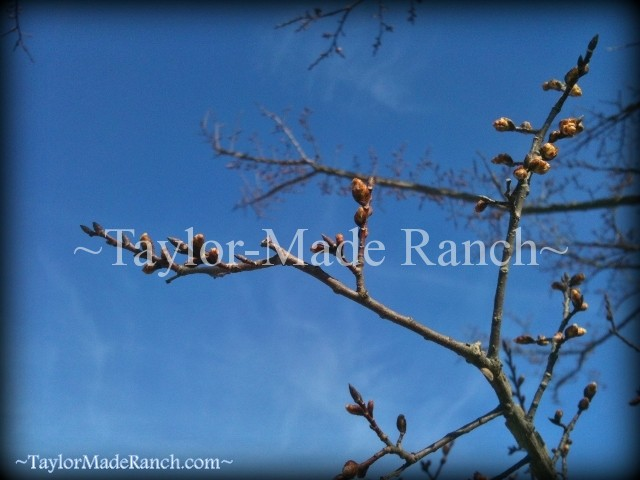 Anxious Spring In Northeast Texas  #TaylorMadeRanch