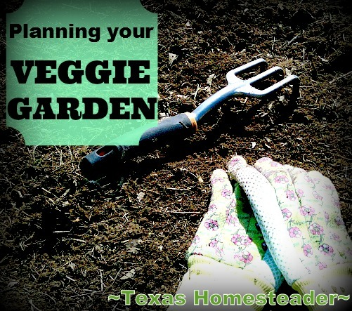 See How I Decide What Vegetables To Plant Each Spring Using Past Experience, Companion Planting Guides, Raised Beds, Three Sisters, Etc. #TexasHomesteader