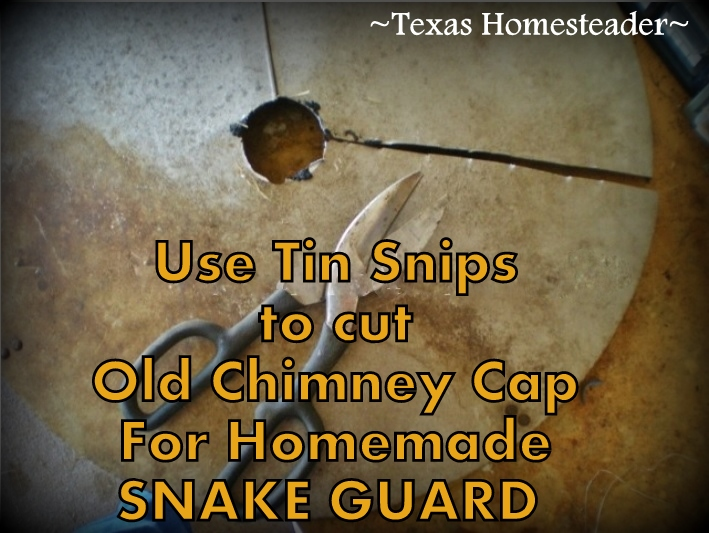 See how we made a homemade predator guard for our martin house using a old chimney cap to keep the snakes away from the birds! #TexasHomesteader