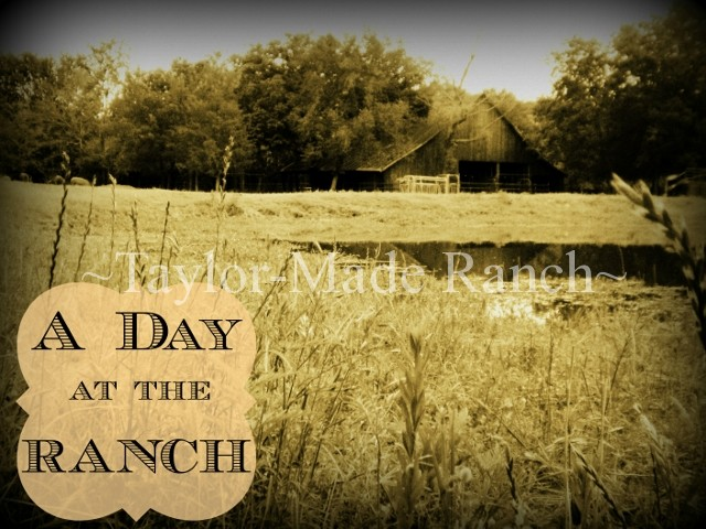 Did you ever wonder what it's like to live & work on a NE Texas ranch? Come with me to see what a typical day looks like - we love it! #TaylorMadeRanch