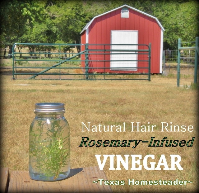I use the power of the sun to infuse rosemary into plain vinegar and then make it into a natural hair rinse. My hair is soft & shiny! #TexasHomesteader