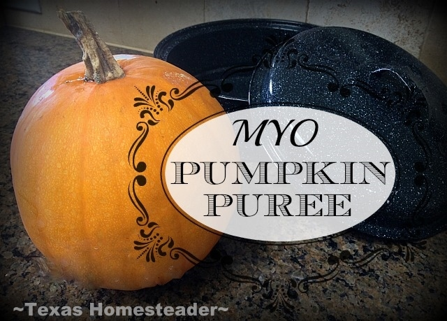 I'm cooking up my heirloom Sugar Pie Pumpkin from the garden today for that delicious pumpkin puree I crave. Come see how easy it is! #TexasHomesteader