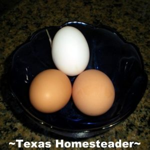 Free-Range Eggs. Wonder what it's like to live & work on a Texas homestead? Well c'mon down & spend the day with us! #TexasHomesteader