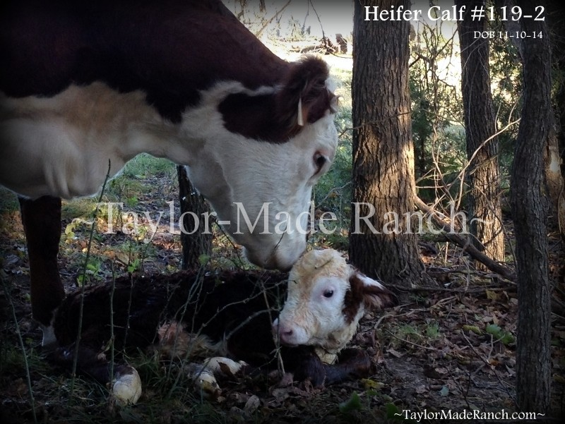 Wordless Wednesday: Mama and new baby - Love At First Sight!  #TaylorMadeRanch