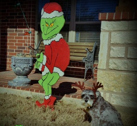 "Our Mini-Schnauzer Bailey does a fine job portraying MAX from ""How The Grinch Stole Christmas"". LOL #TexasHomesteader"