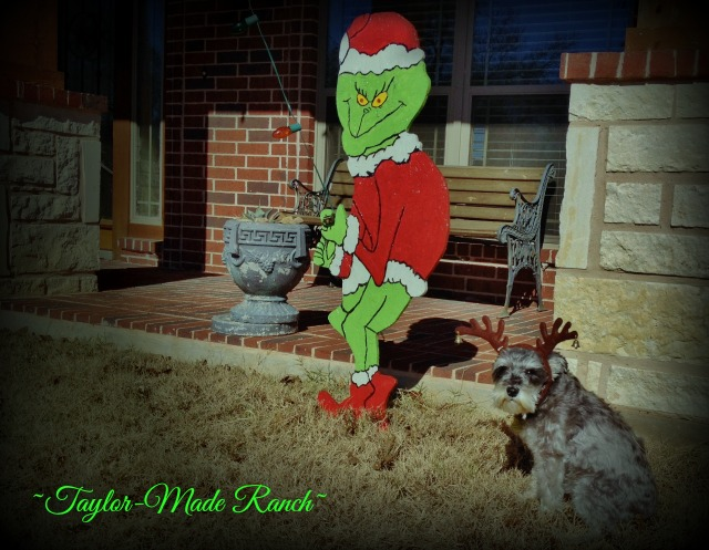 "Our Mini-Schnauzer Bailey does a fine job portraying MAX from ""How The Grinch Stole Christmas""! #TaylorMadeRanch"