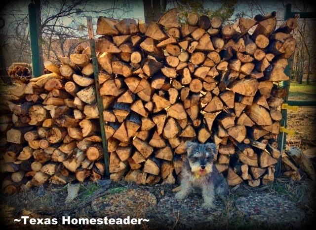 Wordless Wednesday: Cold weather's coming, wood is stacked & ready! #TexasHomesteader