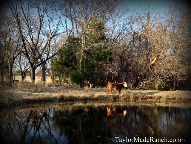 Each Season Shows Its Own Beauty.  #TaylorMadeRanch