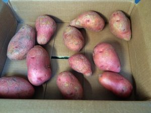 Potatoes stored in box. Storing Potatoes Long-Term: I've heard that you can store potatoes for months on end if you do it right. I need some advice! #TxHomesteader
