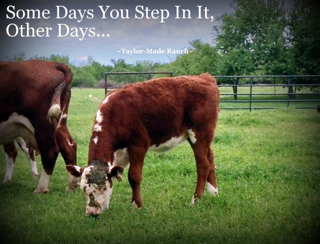 Wordless Wednesday: Some Days You Step In It, Other Days...  LOL - Poor Girl! #TaylorMadeRanch