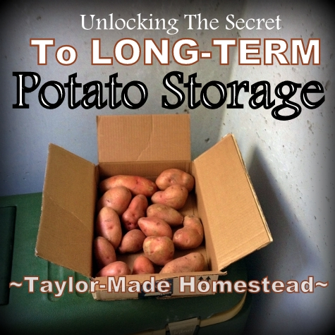 Storing Potatoes Long-Term: I've heard that you can store potatoes for months on end if you do it right. I need some advice! #TaylorMadeHomestead