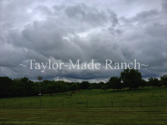 Mother Nature has been fighting back this spring.  Alas, I've had to start all over in May.  Want to see how it's going?  Read on.  #TaylorMadeRanch
