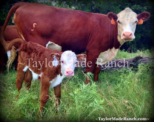 Did you ever wonder what a typical day at our NE Texas ranch looks like?  C'mon with me for A Day At The Ranch... #TaylorMadeRanch