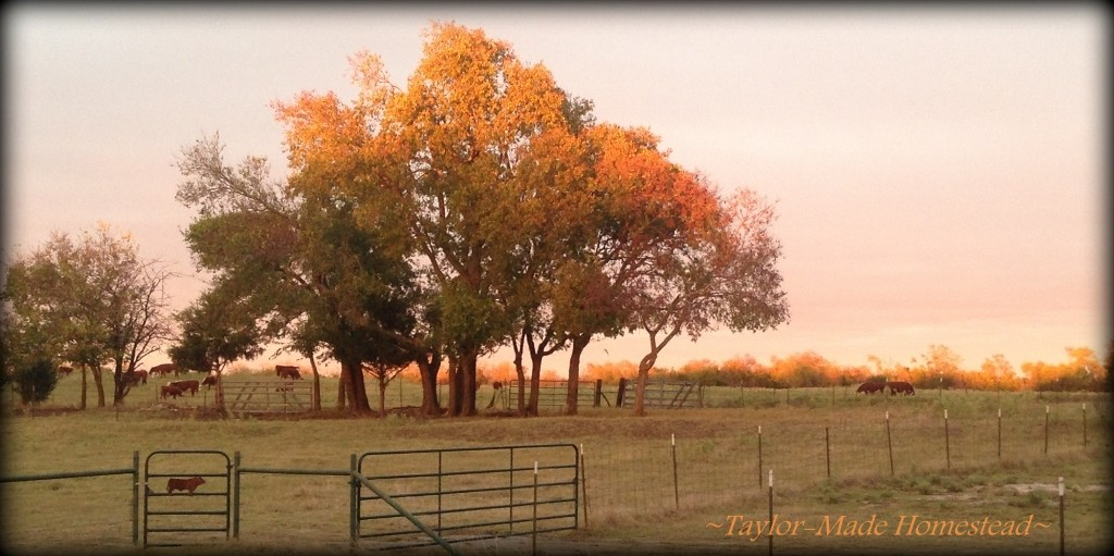As I glanced out my window I see this sight! BEAUTIFUL! ‪#‎TaylorMadeHomestead‬ - ‪#‎NoFilterNeeded‬ - ‪#‎AutumnInTexas‬ - ‪#‎GodIsGood‬