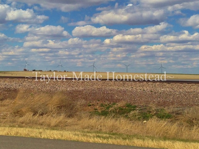 Amarillo Texas windmills - We recently took a road trip to Amarillo, Texas to visit famil. Come see what a great time we had including the Amarillo Little Theater #TaylorMadeHomestead