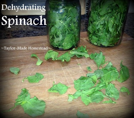 Mother Earth News Post - Dehydrated Spinach. I dehydrated fresh spinach to enjoy later in the season - I loved the results! #TaylorMadeHomestead