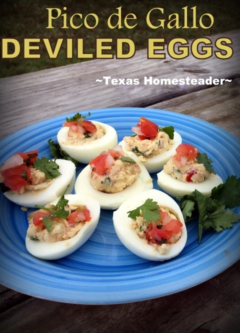 Homestead Hack: Deviled eggs using pico de gallo to give them a kick. Give it a try, it's a delicious spicy twist on an old favorite! #TexasHomesteader