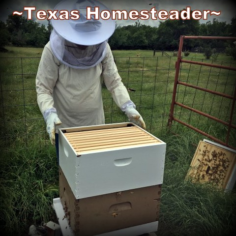 Adding a deep hive box to the existing hive. Beginning Beekeeping Series: Today we're talking about why and how to expand your bee hives. (We're using Langstroth hives) #TexasHomesteader