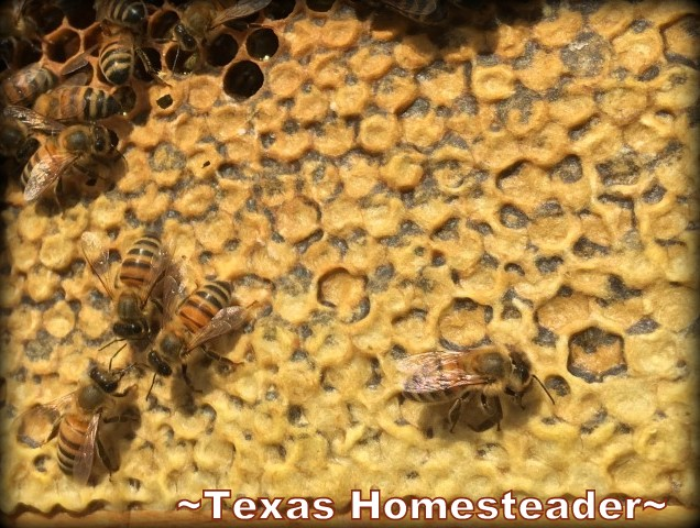 Honey on frames. Beginning Beekeeping Series: Today we're talking about why and how to expand your bee hives. (We're using Langstroth hives) #TexasHomesteader