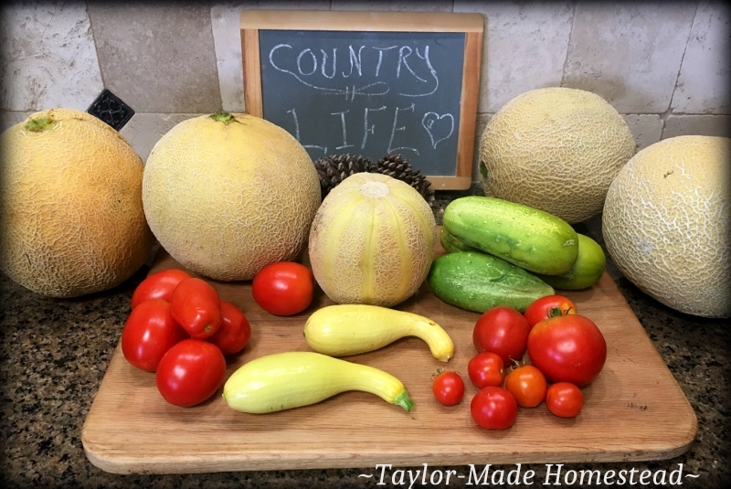 Usually by August our NE Texas vegetable garden is burned up & gone.but this year I'm still harvesting heavily every day. #TaylorMadeHomestead