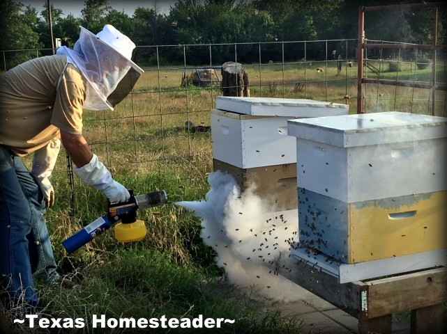 Varroa Mites are a constant worry in bee hives. Detection & treatment is important see how we treat Varroa mites. Fogging The Hives. #TexasHomesteader
