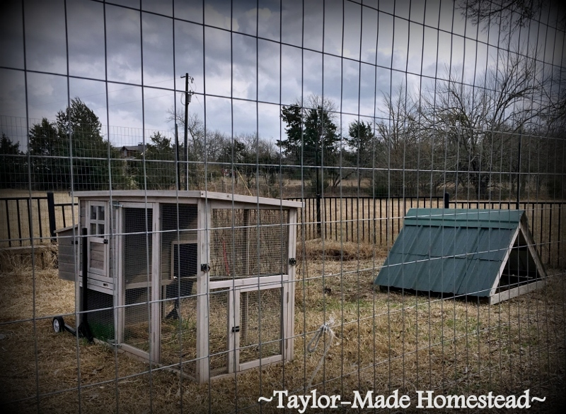 When our cistern enclosure deteriorated we tore it down but we needed a way to keep our mini Schnauzer safe around it. Use Whatcha Got! #TaylorMadeHomestead