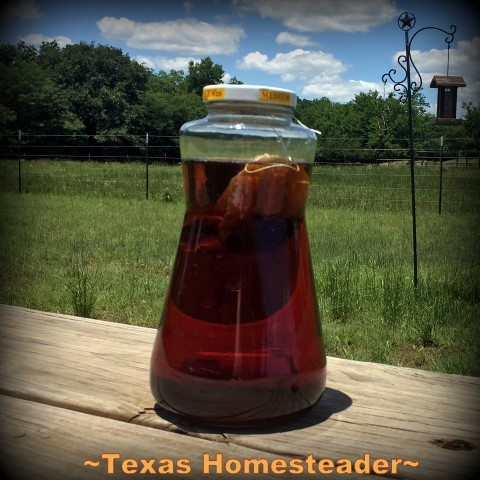Sun tea. Come see 5 Frugal Things we did this week to save some cold, hard cash. It's easy to save money throughout the week if you keep your eyes open. #TexasHomesteader