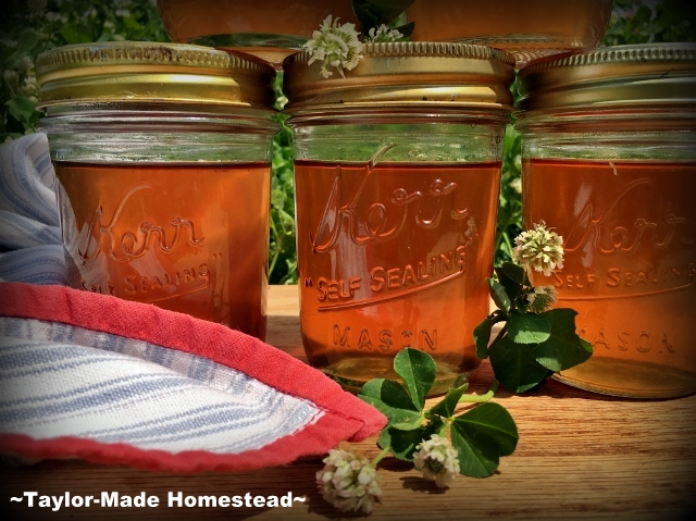 Clover-Blossom Jelly #TaylorMadeHomestead