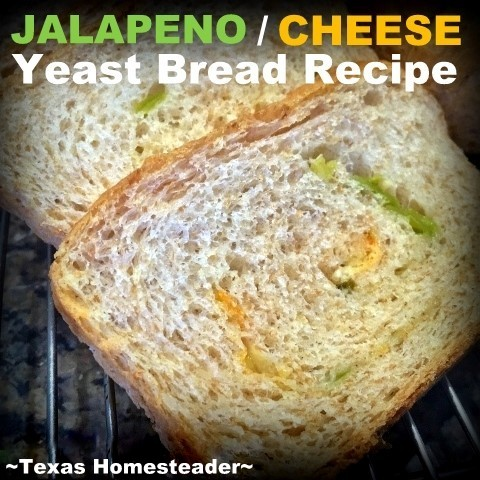 I Use My Standard Fluffy, Delicious, Sandwich Bread Recipe To Make A Spicy Jalapeno-Cheese Bread Version. DELICIOUS and so easy! #TexasHomesteader