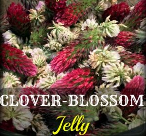 Clover Blossom Jelly - Made from a mixture of fragrant clover blossoms! #TexasHomesteader