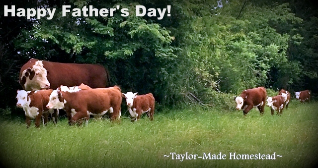 Our 'Big Boy' would like to wish all you dads out there a very Happy Father's Day! #TaylorMadeHomestead
