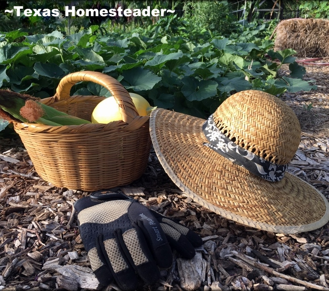 Sun Protection #TexasHomesteader