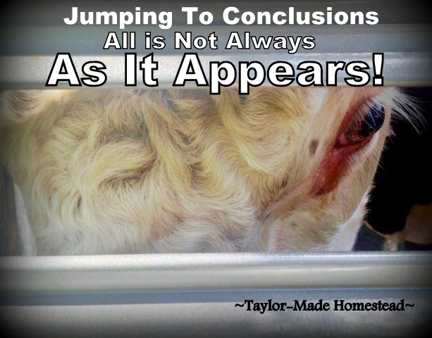 All is not always as it appears! Don't make snap judgements & participate in character assassination. Just because someone tells you so doesn't make it true! #TaylorMadeHomestead