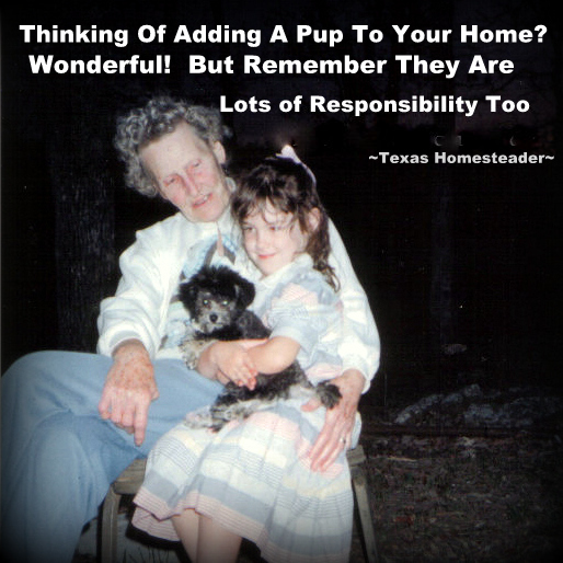 Are you thinking of having Santa bring a pup for the kids this Christmas? That's AWESOME! But be sure you're ready for the commitment. #TexasHomesteader