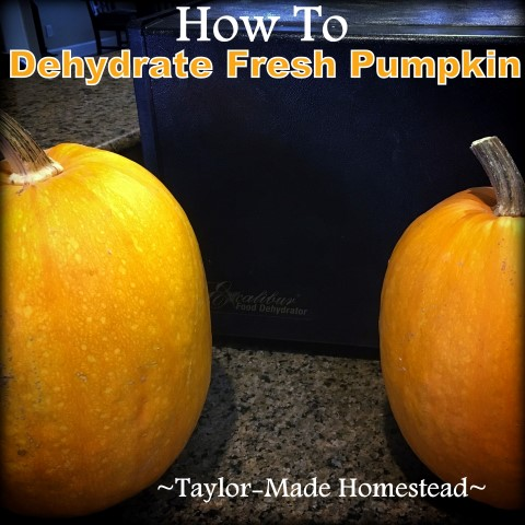 How to dehydrate pumpkin to use all year long! These fresh pumpkins won't be wasted and now can be stored in tiny jars in my pantry. #TaylorMadeHomestead
