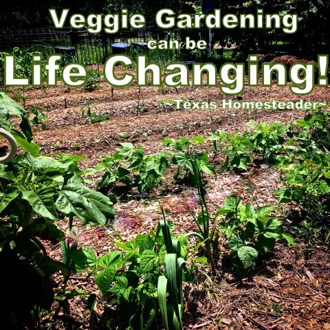 4 Ways Vegetable Gardening Can Change Your Life! Come see why you should grow a vegetable garden too! #TexasHomesteader