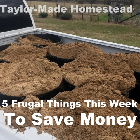 Our income is low, but there are many easy ways to save money. Come see 5 Frugal Things we did this week to save some cash! #TaylorMadeHomestead