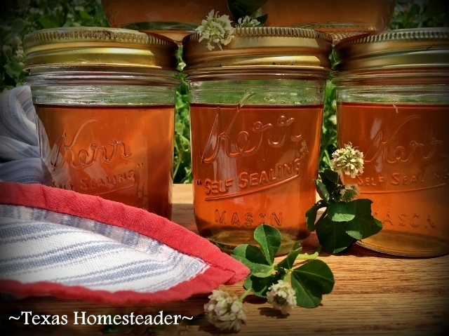 Making Clover-Blossom Jelly. We have many clover blossoms in the pastures. Why not make Jelly with those fragrant blooms? It is delicious! #TexasHomesteader
