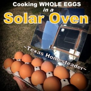 Solar Oven Cooking Whole Eggs. Sun Tea - quick to brew using the power of the sun whether winter or summer. A delicious, healthy and trash free beverage. #TexasHomesteader