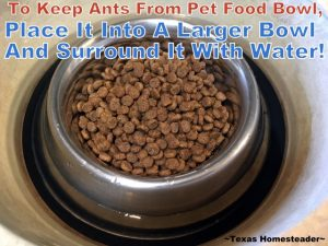 Ants were invading Bailey's dog food bowl. So we turned to a poison-Free Homestead Hack to eliminate them. Surround her bowl with water. #TxHomesteader