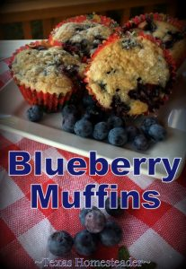 With a batch of fresh blueberries to enjoy, I decided to make Blueberry Muffins. So easy, so delicious. Come check out my recipe! #TexasHomesteader