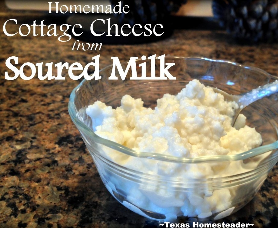 I often use lightly-soured milk to make my own delicious cottage cheese. This reduces our food waste and provides delicious food. #TxHomesteader