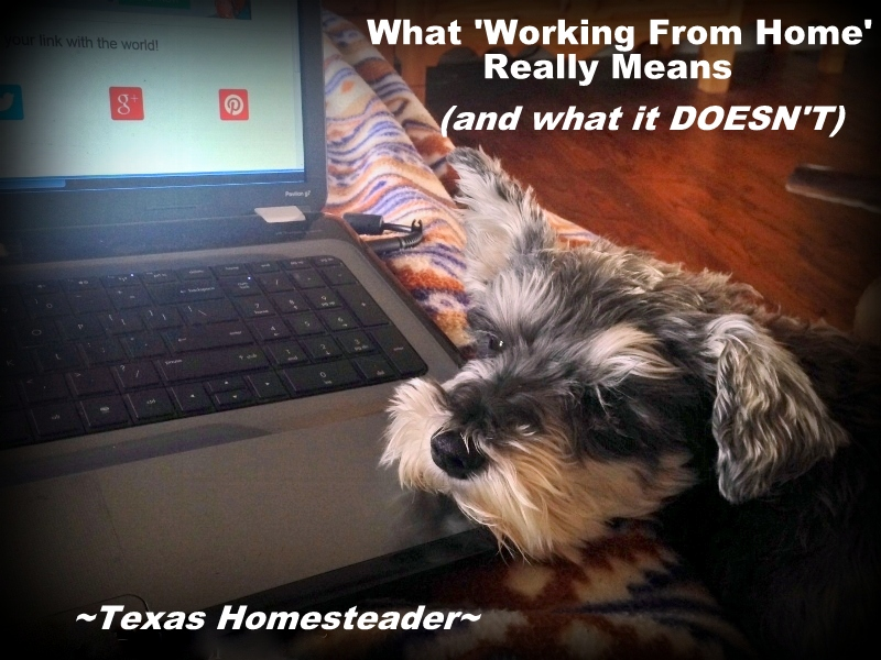 Working At Home often gives others the false perception that you have lots of free time. Whether self employed, homeschooler or stay-at-home parent, it's hard work! #TexasHomesteader