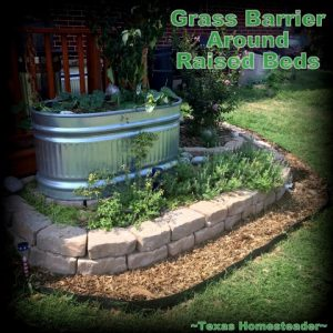 Bermuda Grass is notoriously hard to control. When it creeps into your raised beds, heck you've lost the war! Come see how we're protecting our raised beds with grass barrier. #TexasHomesteader